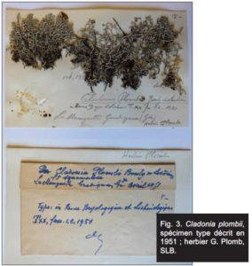 Cladonia plombii, spécimen type de lichen de Gironde, décrit en 1951 ; herbier G. Plomb, SLBx.