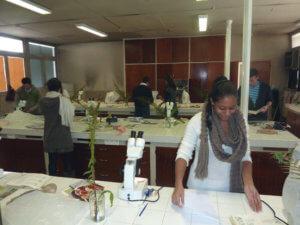 Confection d'une planche d'herbier dans la salle d'enseignement